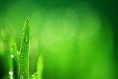 природа травы предпосылки стоковая фотография rf