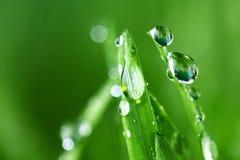 природа травы предпосылки Стоковое Изображение RF