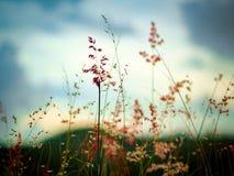 Природа травы цветет whith стоковые фото