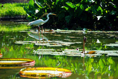 природа тропическая Стоковая Фотография RF