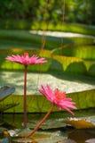 природа тропическая Стоковая Фотография