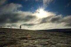 природа Финляндии одичалая Стоковая Фотография RF