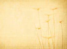 природа холстины Стоковые Изображения RF