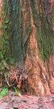 природа цвета предпосылки Стоковая Фотография