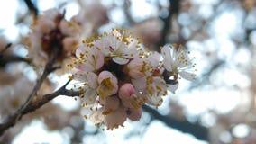 Цветки цветения весны акции видеоматериалы