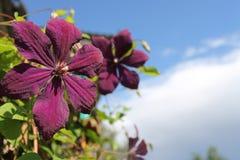 Природа цветка небесно-голубая зеленая стоковое изображение rf
