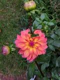 Природа цветка Стоковые Фото