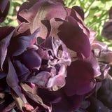Природа цветков тюльпанов красивая вне захватывающего стоковые фотографии rf