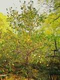 Природа цветов осени изумительна Стоковая Фотография