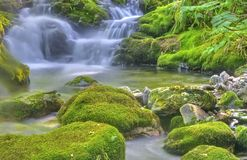 природа чисто стоковые фото