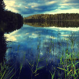 природа чисто Стоковое Фото