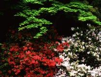 природа 107 Стоковое Изображение RF