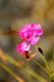 природа 112 Стоковая Фотография RF