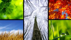 природа Стоковое Изображение RF