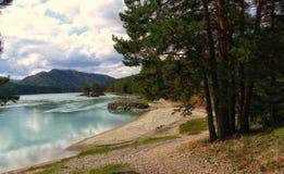 Природа Altai Стоковые Изображения RF