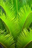 природа greenery Стоковое Изображение
