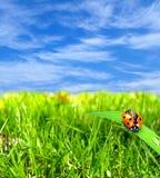 природа ladybug стоковая фотография