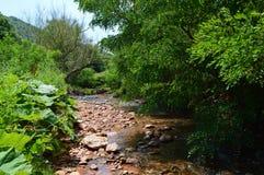 Природа Red River красивая Стоковое Изображение RF