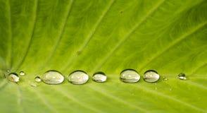 природа s драгоценностей Стоковые Изображения RF