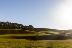 Природа Uniqe в Новой Зеландии стоковое фото