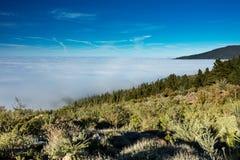 Природный парк короны Forestal, Тенерифе, Канарские острова - массивнейший лес расположенный на большую возвышенность над облакам стоковые изображения
