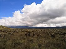 Природный парк Purace национальный в Колумбии с экосистемой paramo стоковые изображения