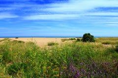 Природа Англия побережья Кента стоковое фото