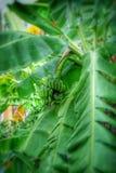 Природа бананового дерева Стоковая Фотография RF