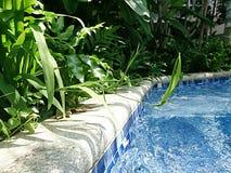 Природа бассейном Стоковое Фото