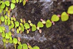 Природа Бали Стоковая Фотография