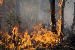природа бедствия Стоковая Фотография RF