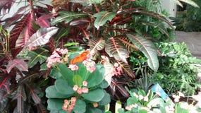 Природа бобра Стоковая Фотография RF