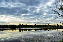 Природа болота в Таиланде Стоковые Изображения