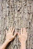 природа внимательности Стоковое Фото