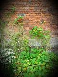 Природа вползает вверх по стене Стоковая Фотография RF