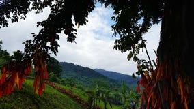 Природа Вьетнам стоковая фотография rf