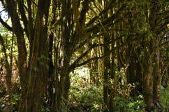 Природа в горе Стоковая Фотография RF