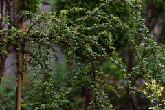 Природа в городе Стоковые Фото