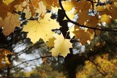 Природа в осени, территория Altai, западный Сибирь, Россия стоковая фотография