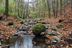Природа в осени Стоковые Изображения