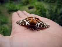 Природа в руке человека Стоковая Фотография RF