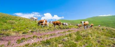 Природа в Сербии Stara Planina Стоковые Изображения RF