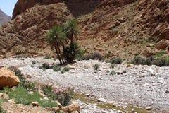 Природа в ущелье Todra, Марокко Стоковое Фото