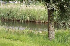 Природа в фронте наша дверь Стоковая Фотография