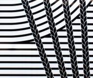 Природа в черно-белом Стоковые Фото