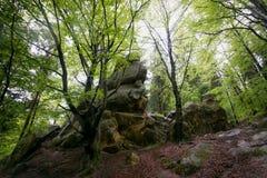 Природа в Tustan Стоковое фото RF
