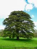 Природа Деревья Стоковая Фотография
