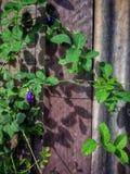 Природа дерева цветка фиолетовая Стоковое фото RF