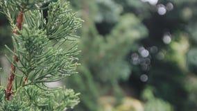 Природа дерева Стоковая Фотография