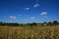 природа деревенская Стоковое Изображение RF